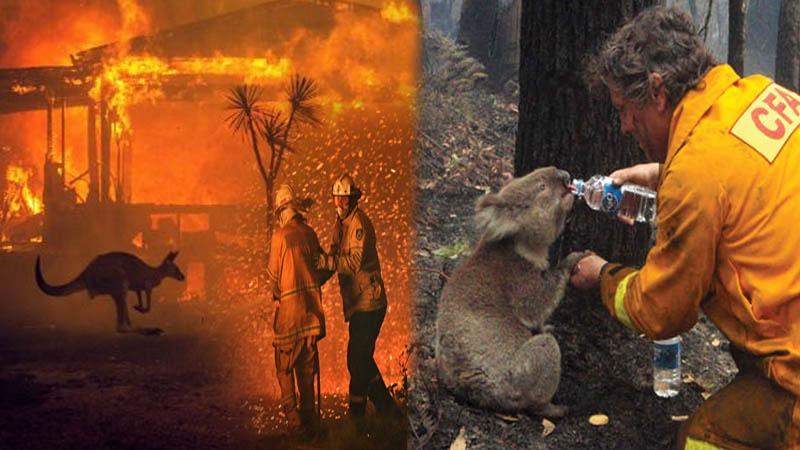 Bushfire wreaks havoc in Australia since late July