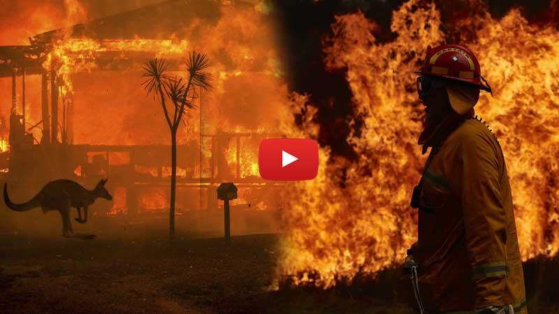 Australian Bushfire: All in one Viral Video that will break your heart