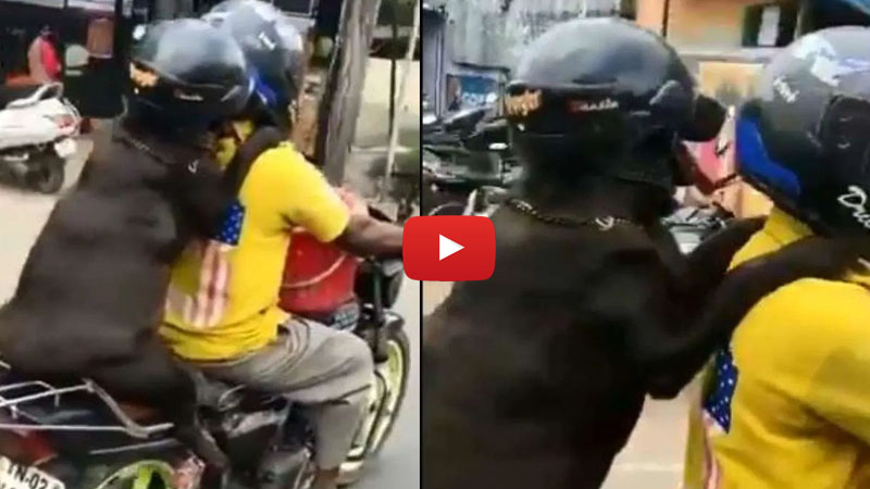 Viral Video of Dog riding behind a man wearing helmet in TN