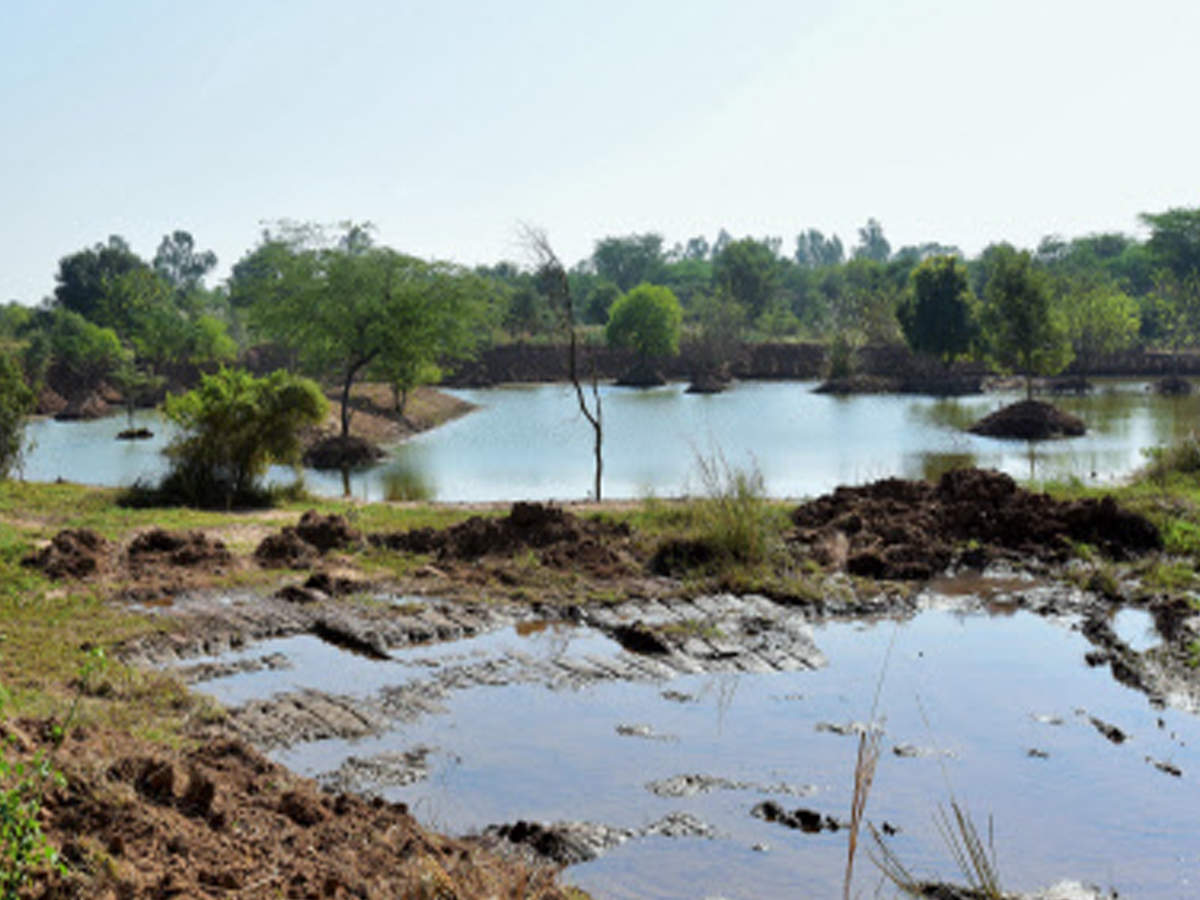 Contamination of Sukhna: Wetlands authority asks UT to discuss sewage issue with Punjab