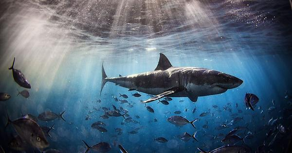 Shark Awareness Day 2021: Know some lesser known facts about Sharks that will blow your mind