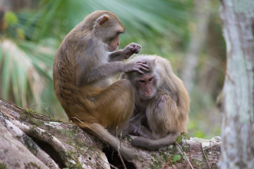 Whats Is the new Monkey B Virus That Killed A Vet In China