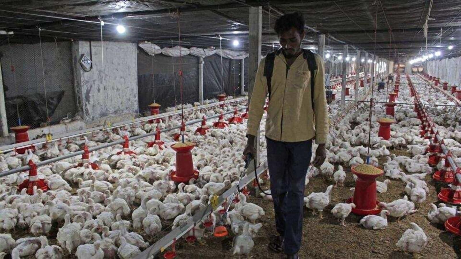 "AIIMS: ""No need to panic"" Human to human Bird flu transmission rare."