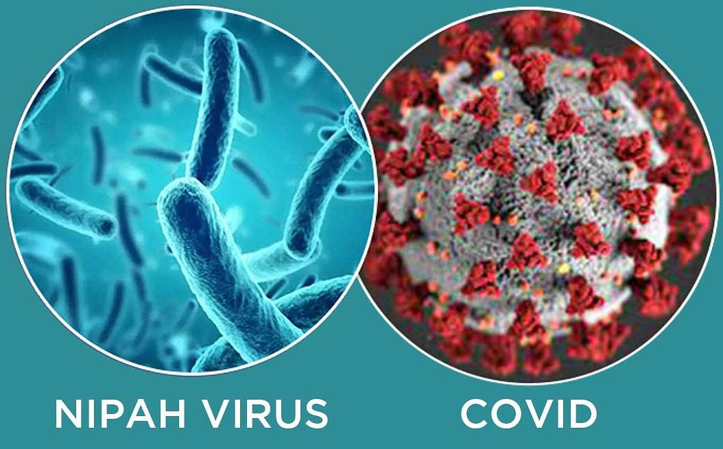 Explained: Why Nipah virus can be bigger threat than coronavirus, if not contained earlier?