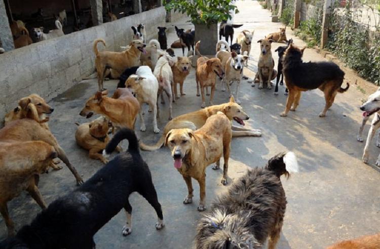 Karnataka: About 100 stray dogs buried alive in Shivamogga, 12 people arrested