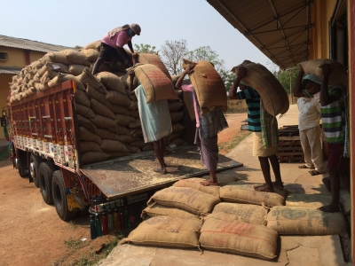 Paddy procurement from Oct 11 in interest of farmers, consumers: Govt