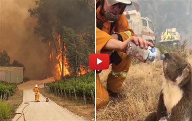 Australian Bushfire: Viral Video of Firefighter helping thirsty koala
