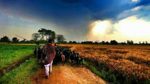 interesting facts about punjab